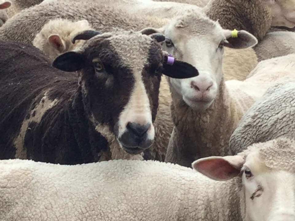 RJ - Tinakori Animal Farm Clunes