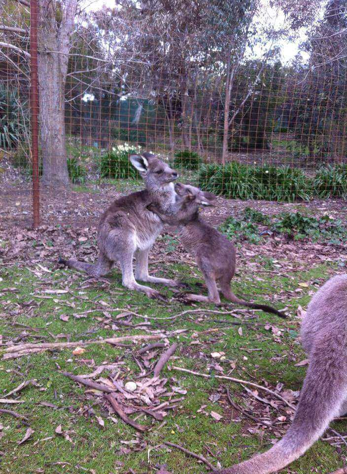 Jack & Jill - Tinakori Animal Farm Clunes