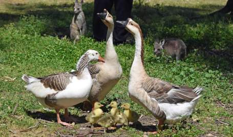 Feed Animals - Tinakori Animal Farm Clunes