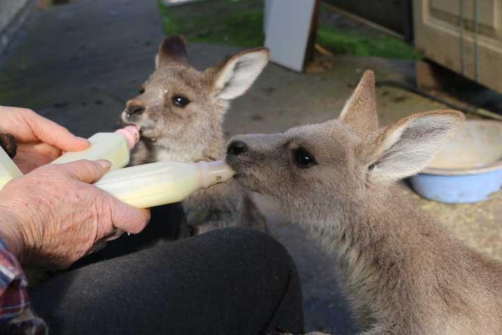 Tinakori Animal Farm Holidays & Accomodation | Clunes Victoria